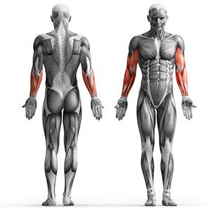 MP-U232_musculos con curl de biceps dkn