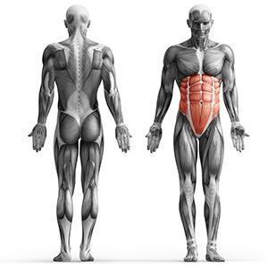 MP-U223_ musculos que se trabajan en la maquina de abdominales mpu223 dkn