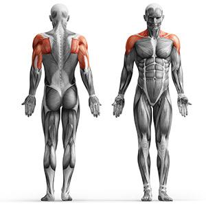 MP-U226 musculos que se trabajan con mpu226, press de hombros dkn