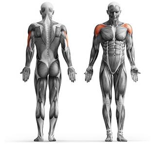 Músculos que trabalham na máquina de aumento lateral DKNPU228